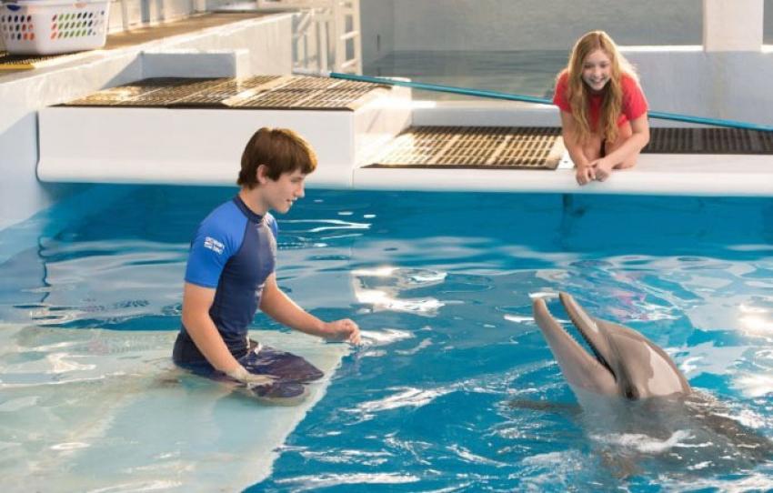 Dolphin Tale 2 Photos