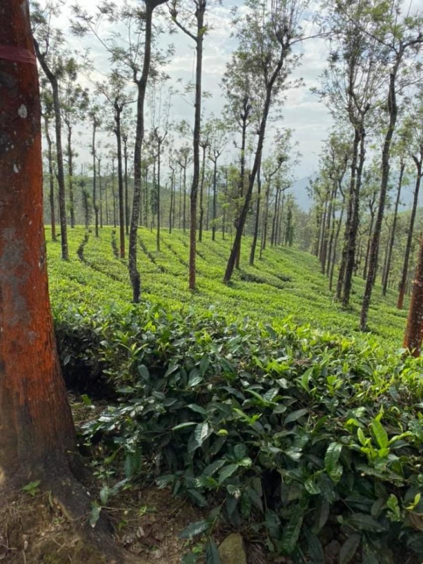 Ragini Dwivedi Spent Weekend At Wild Planet Jungle Resort In Gudalur Photos