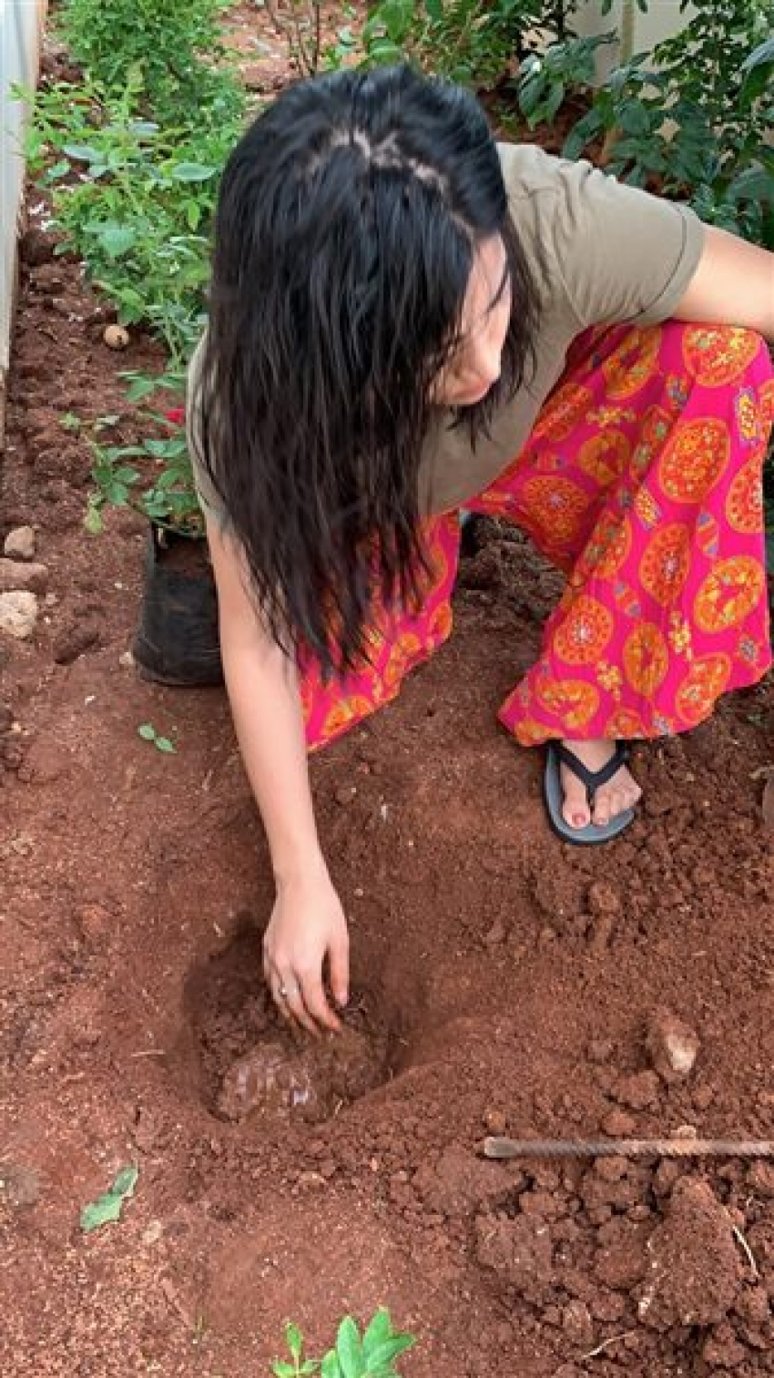 Indian Celebs Accept Green India Challenge Photos